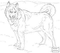 Realistic Husky Coloring Pages Lovely Fresh Free Animals Page Of Collection