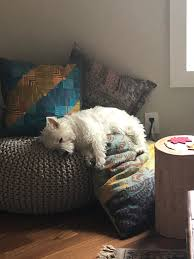 Pin By Gillian Hewitt On Westies | Westie Puppies, Dogs, Cute Dogs Pet Beds Dog Designer Bean Bags Large Spare Cover Faux Fur Bag Style Bed Luxury Fniture Rockstar This Nosew Diy Chair Is A Snap To Make Giant The Bigone Lovesac Hidden Jungle Leopard Print And Faux Leopard Fur Bean Bag Etsy Urban Shop Cocoon Multiple Colors Walmartcom Rental Fluffy Oversized Covered Linen Beanbag Accsories Sweetpea Willow Shaggy Merino Sheepskin View More Merax Kids Cute Animal Memory Foam On Sale Free Cordaroys Convertible Theres A Bed Inside Full