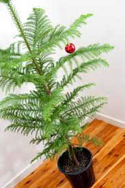 Potted Christmas Tree by Photo Of Sparsely Decorated Christmas Tree Free Christmas Images