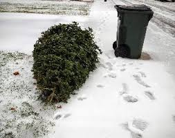 Waste Management Christmas Tree Pickup Mn by Battle Creek Mi Official Website