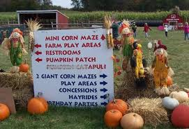 Pumpkin Picking In Waterbury Ct by Find Corn Mazes In South Windsor Connecticut Foster Family Farm