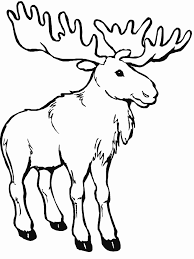 Coloring Page Caribou Animals 3
