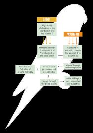 Uv Lamp Vitamin D Supplement by Vitamin D3 Bird Lighting