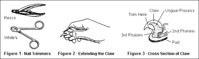 how to cut a cats nails hsci cat care tip