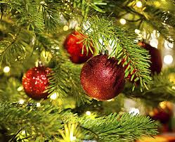 Fresh Cut Christmas Trees At Menards by 8 Places To Pick The Perfect Christmas Tree In Rockford