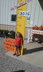 Pumpkin Patch Caledonia Il For Sale by The 10 Best Pumpkin Patches In Illinois 2016