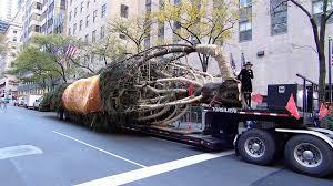 Christmas Tree Rockefeller 2017 by Rockefeller Center Christmas Tree Arrives To The Plaza Live On