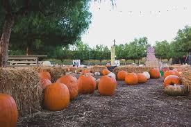 Pumpkin Patch Visalia Ca Hours by Peltzer Pumpkin Farm