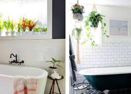 Best Plants For Bathroom No Light by Best Bathroom Plants Australia Bathrooms Cabinets
