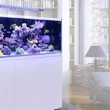 der richtige standort fürs aquarium