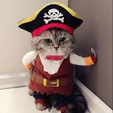costume for cat 2016 new pet cat pirate costume suit cat clothes corsair