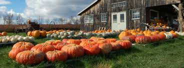 Mccalls Pumpkin Patch Albuquerque Nm by Pumpkin Patches Near Albuquerque Nm