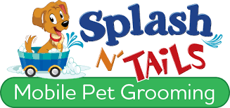 mobile cat grooming splashntails mobile pet grooming sterling ashburn leesburg va