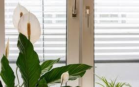 die richtige luftfeuchte in wohnräumen für menschen tiere