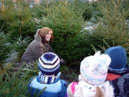 Which Christmas Tree Smells The Best Uk by The Best Places To Buy Christmas Trees In Glasgow And Edinburgh