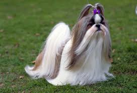 Low Shedding Dogs In India by 10 Breeds That Are Perfect For Apartment Living Dogspot In