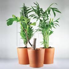 plante d駱olluante bureau plante publicitaire surfez sur la vague du végétal objet