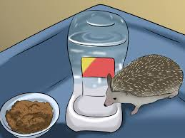 Ceramic Heat Lamp For Hedgehog by How To Make A Home For Your Hedgehog 7 Steps With Pictures
