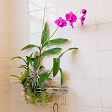 Pot Plants For The Bathroom by Diy Hanging Shower Planter Apartment Therapy Planters And Therapy