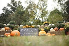 Pumpkin Patch Kitsap County by Local Pumpkin Patches 100 Images The Best Pumpkin Patches In