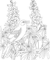 Free Printable Coloring Page Texas State Bird