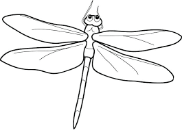 Dragonfly Coloring Pages Detailed Printout Cartoon Pictures
