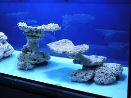 Minimalist Aquascaping - Page 31 - Reef Central Online Community Home Design Aquascaping Aquarium Designs Aquascape Simple And Effective Guide On Reef Aquascaping News Reef Builders Pin By Dwells Saltwater Tank Pinterest Aquariums Quick Update New Aquascape Of The 120 Youtube Large Custom Living Coral Nyc Live Rock Set Up Idea Fish For How To A Aquarium New 30g Cube General Discussion Nanoreefcom Rockscape Drill Cement Your Gmacreef Minimalist 2reef Forum