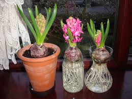 growing bulbs gardening with children