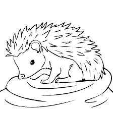 Baby Hedgehog Coloring Page