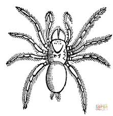 Carolina Wolf Spider Coloring Page