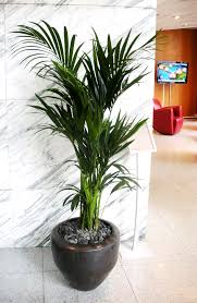 plante de bureau des plantes de bureau bénéfiques green inside
