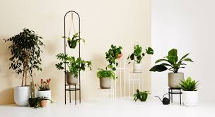 Best Plant For Bathroom Australia by Beautiful Functional Plant Stands That Encourage You To Get