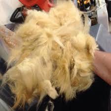 mobile cat grooming carolyn s mobile cat grooming 33 photos 26 reviews pet