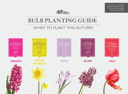 hillier garden centres guide to bulb planting hillier