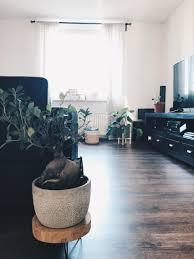 plants bonsai wohnzimmer couchliebt interior d