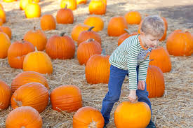 Pumpkin Patch Glendale Co by Pumpkin Patch Games Prizes And Fun