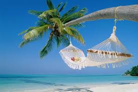 hammock palm tree HD Desktop Wallpapers