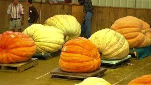 Pumpkin Hollow Haunted House Piggott Ar by Halloween Crazy Travel Channel