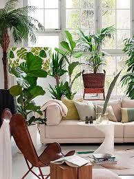 so stylst du den wohntrend jungle stylight