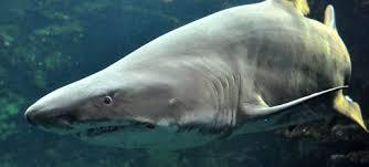 aquarium geant a visiter belgique l aquarium des requins à nausicaa centre national de la mer