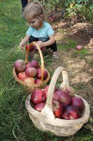 Apple Pumpkin Picking Queens Ny by Ultimate Fall Guide The Best Apple Orchards In Tri State Area
