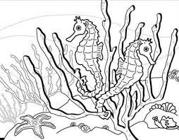 Realistic Underwater Animal Seahorse Coloring Pages For Adults