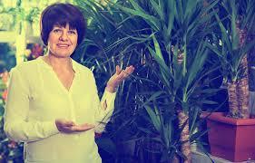 yucca palme pflegen gießen düngen schneiden und mehr