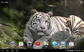 Live Halloween Wallpaper With Sound by Tiger Live Wallpaper Android Apps On Google Play