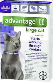 flea treatment for cats advantage ii flea treatment for large cats 9 lbs 6