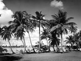 Wallpaper Iphone 6 Tumblr Google Search Pinterest Palm Trees Black And White