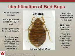 Copyright 2006 President and Fellows of Harvard College Bed Bugs
