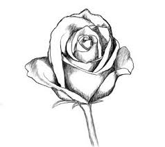 How to draw a rose Drawing & Lettering Pinterest