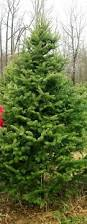 Wadsworth Ohio Christmas Tree Farm by Galehouse Tree Farms