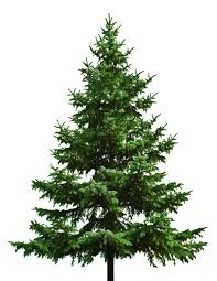 7ft Christmas Tree Amazon by Image Result For Trees Png 101 1 Follage Pinterest